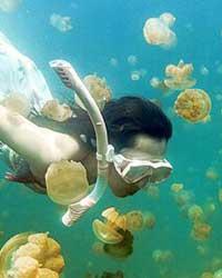 帕劳在太平洋上,位于菲律宾和关岛之间,地处赤道附近,由一个大堡礁和无数小岛以及较小的堡礁构成,很少有台风却是台风形成的地方。