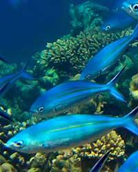 毛里求斯共和国为非洲东部一岛国,位于印度洋西南方,距马达加斯加约800公里,与非洲大陆相距2,200公里。作为火山岛国,毛里求斯四周被珊瑚礁环绕,岛上地貌千姿百态,沿海是狭窄平原,中部是高原山地,有多座山脉和孤立的山峰。